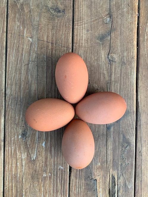 Lavender Marans Hatching Eggs