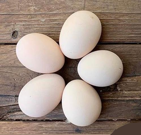 Salmon Faverolles Hatching Eggs