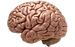 Brain-PNG-Image.png