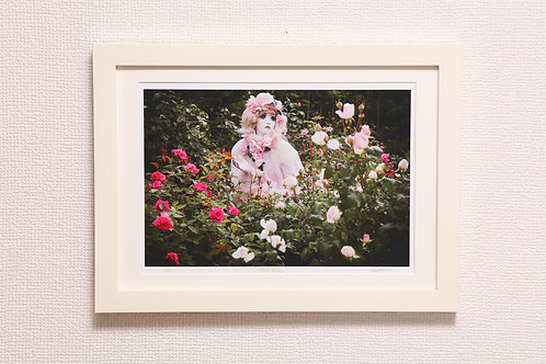 "minori mini-prints ""Pink Rose"""