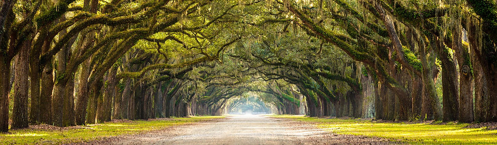 Savannah%20GA_edited.jpg