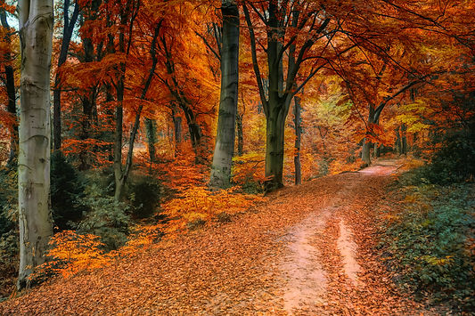 photo-of-trees-during-fall-1640820.jpg