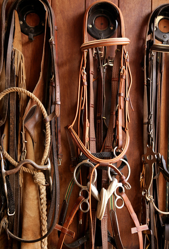 Horse riders complements, rigs, reins, l