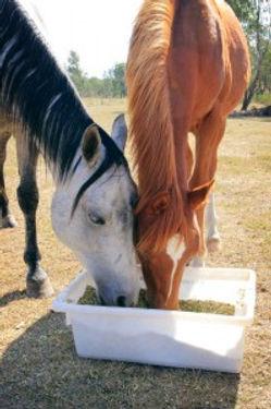horse grain.jpg