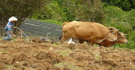 Foto agricultura.jpg