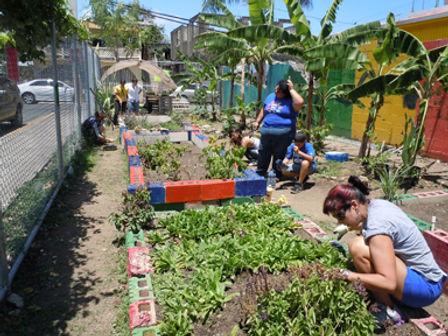 Agricultura Urbana Huerto-Las Monjas.jpg