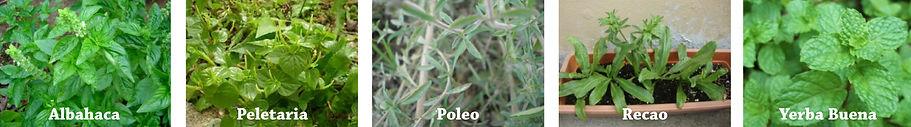PLANTAS MEDICINALES.jpg