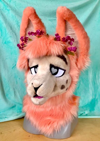 Hime the Llama