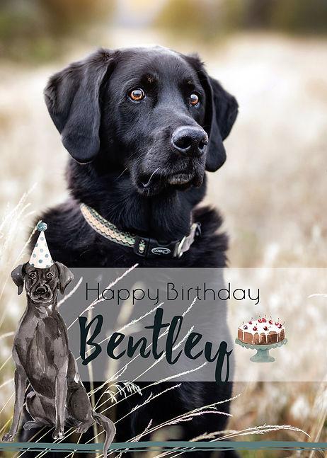 BirthdayBentley.jpg