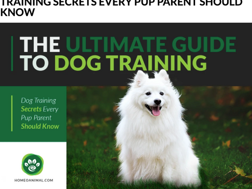 Training Resource: The Ultimate Guide to Dog Training