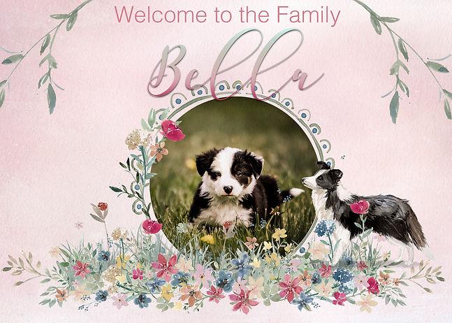 WelcomeBellaNoBow.jpg