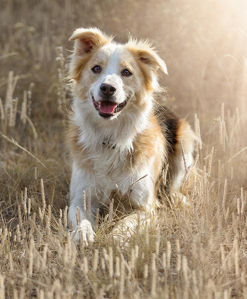 Missoula Portrait Photographer, Dog Photographer & Horse Photographer