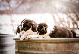 ©SEP_E3A8644_Puppies.jpg