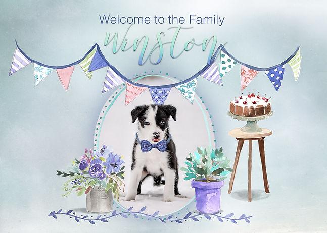 WelcomeWinston.jpg