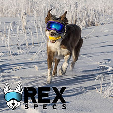 RexSpecsLogoBC.jpg