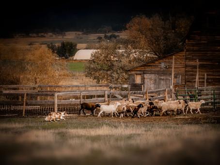 The Beauty of Farm Life