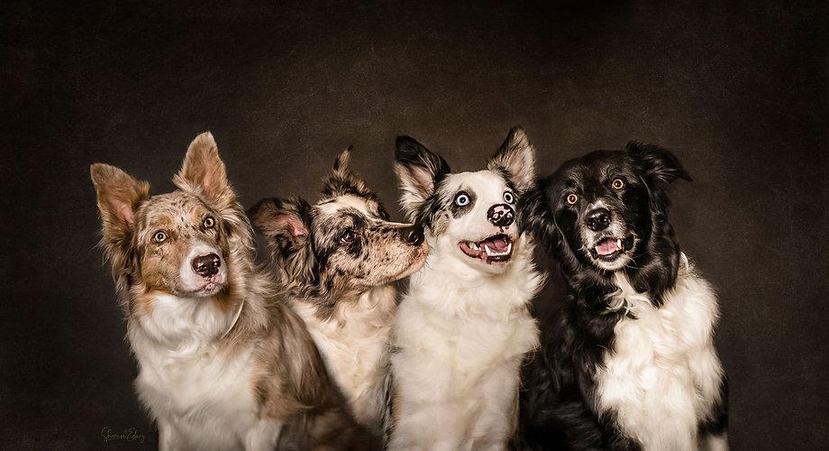 My_Beloved_Doggy_Family_Portrait_web.jpg
