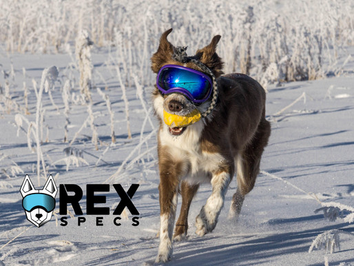Recommendation: Rex Specs - Eye Protection for Your Dog