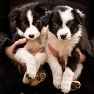 Texas x Roja Pups