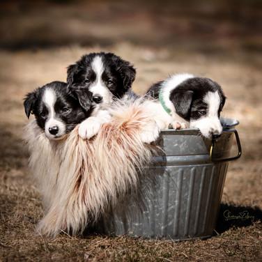 Texas x Grace - Feb 2021 Litter