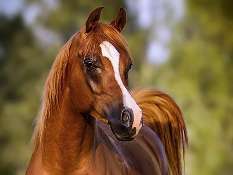 Horse Portraits - Your Questions Answered