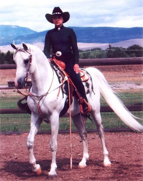 Dahabi Arabians :: Raffons Topper