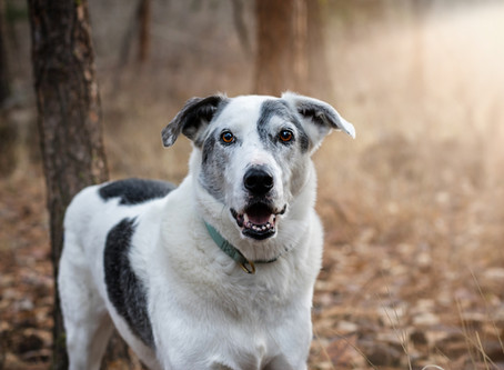 Dog Portraits - Your Questions Answered