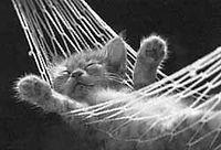 relaxed_kitten.jpg