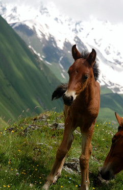 Horse riding tours!