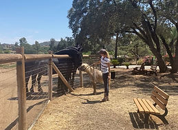 Childrens Nature-horse.jpg