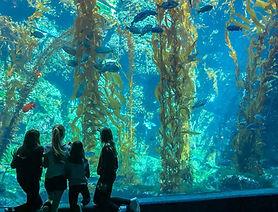 Birch Aquarium.jpg