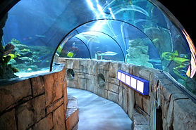 Legoland Sea Life Aquarium.jpg