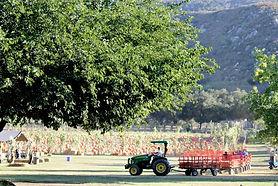 Bates Nut Farm.jpg