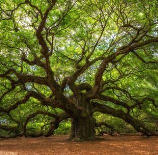 tree1-1.jpg