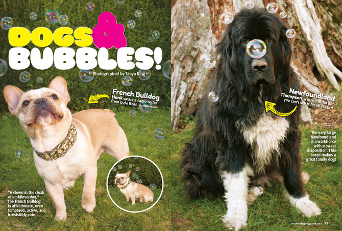 Modern Dog Spring Issue