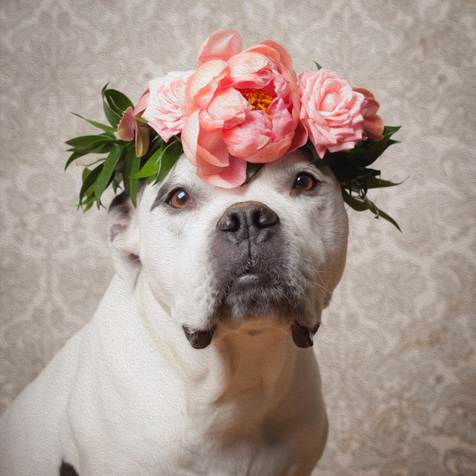 Daisy With Flowers in Her Fur