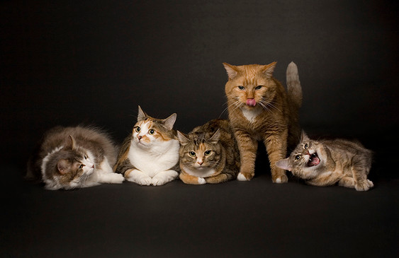5cats.jpg