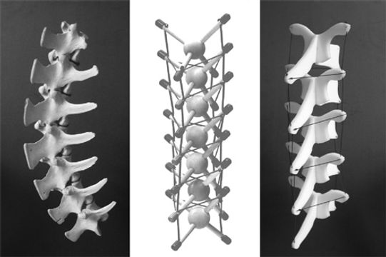 tensinegrity and the spine.jpg