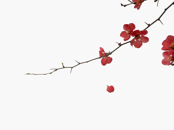 cherry blossom art is simple yet beautif