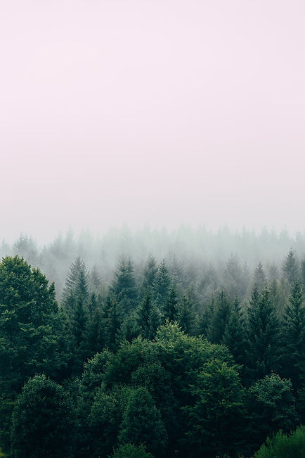 trees in the early morning with mist.jpg