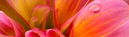 animaatjes-bloemen-30402_edited.jpg