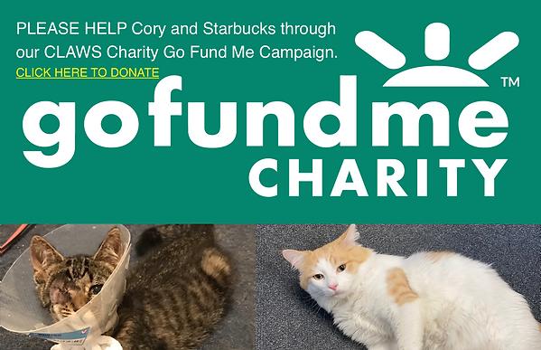 CharityGoFundMe.png