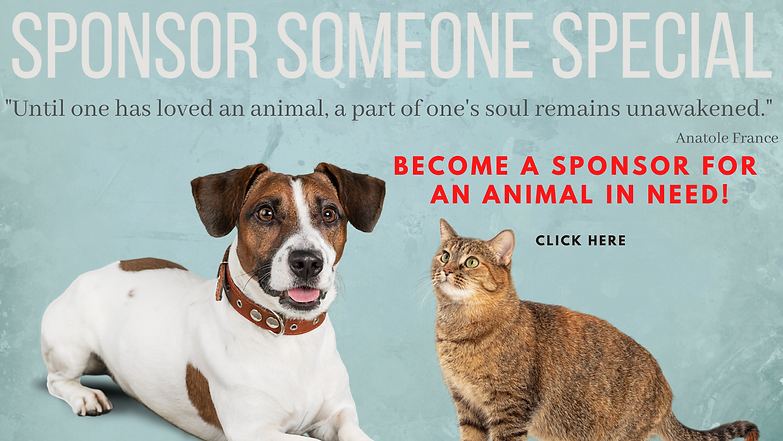BECOME A SPONSOR FOR AN ANIMAL IN NEED!.