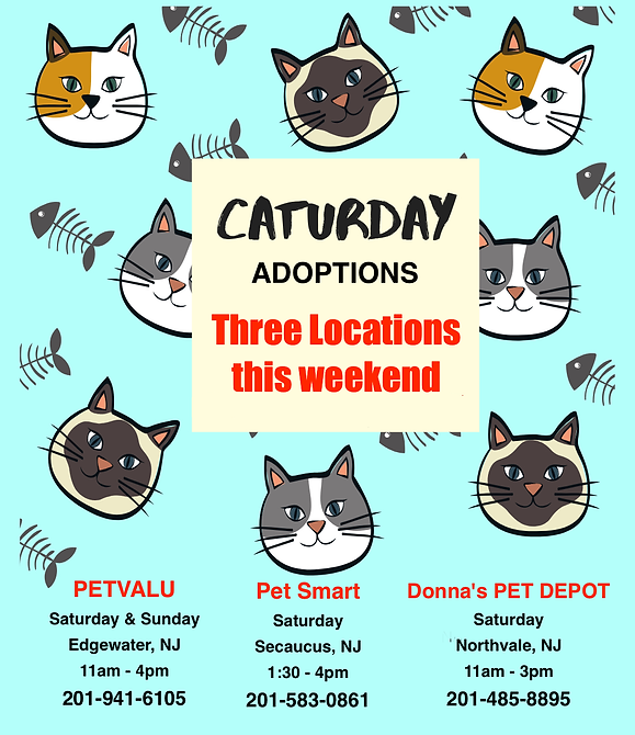 Caturday3 copy.png