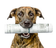 dog newspaper.jpg