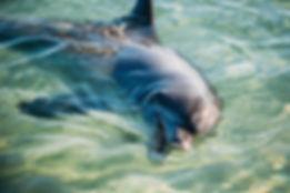 Shark Bay Dolphin feeding