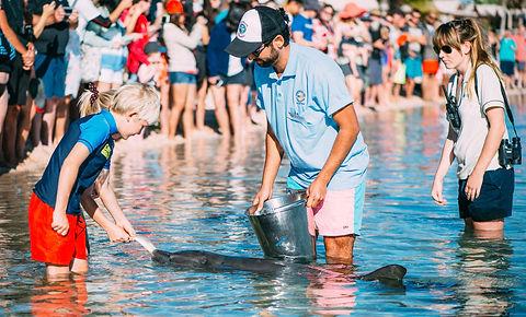 Dolphin feeding at Monkey Mia.jpg
