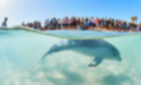 Monkey Mia Dolphin Feeding