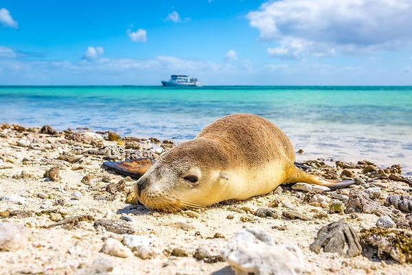 Abrolhos Islands (2).jpg