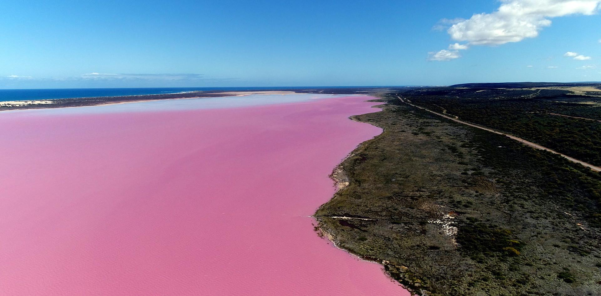 The Pink Lake - Hutt Lagoon (2).jpg